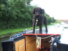 Your pet will also enjoy a canal holiday