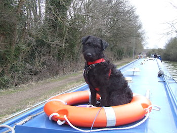 Pet friendly canal holidays