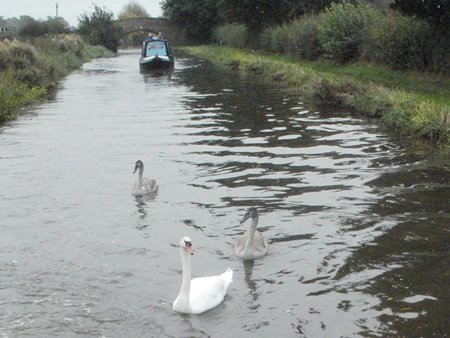 Wildlife on the Canals